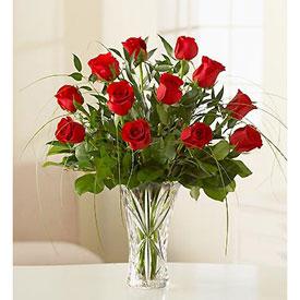 Amazing Roses - Peru